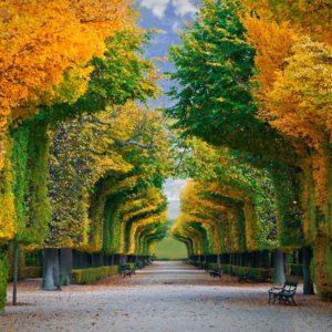 Road Autumn Park Wallpaper