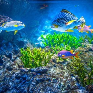 Coral Reef Aquarium Wallpaper