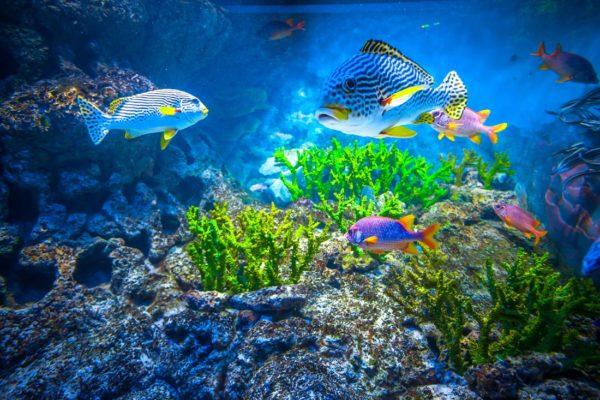 Coral Reef Aquarium Wallpaper