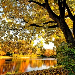 Autumn In Lake Wallpaper