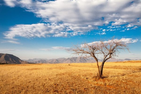 African Tree With Blues Sky Wallpaper