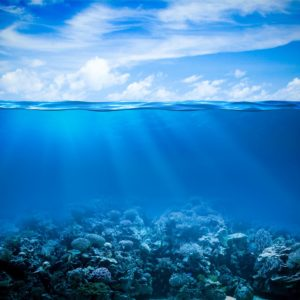 Underwater Coral Reef Horizon Wallpaper
