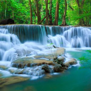 Deep Forest Waterfall Wallpaper