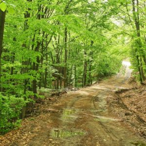 Spring Muddy Forest Road Wallpaper