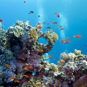 Coral Reef Exotic Fishes Wallpapers