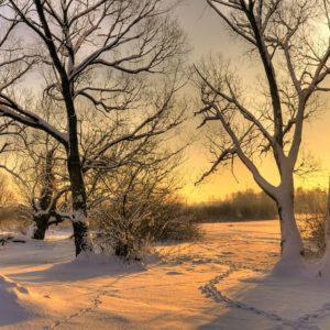 Winter Sunset Trees In Snow Wallpaper