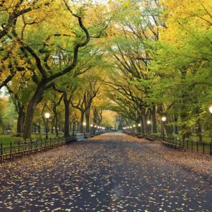 Central Park Mall Area New York Wallpaper