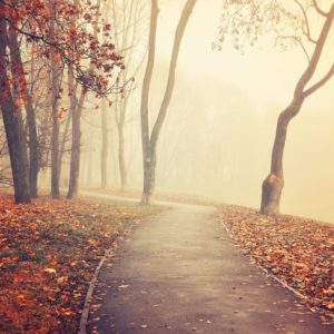 Foggy Autumn Park Alley Wallpaper