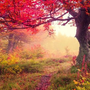 Autumn Trees In Forest Wallpaper