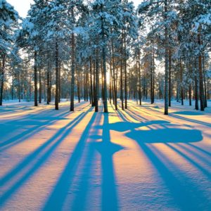 Sunset In A Winter Forest Wallpaper