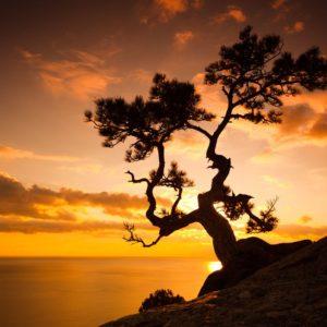Zen Tree On Cliff Rocks Wallpaper